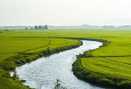 Open an Agricultural Business in Vietnam Image